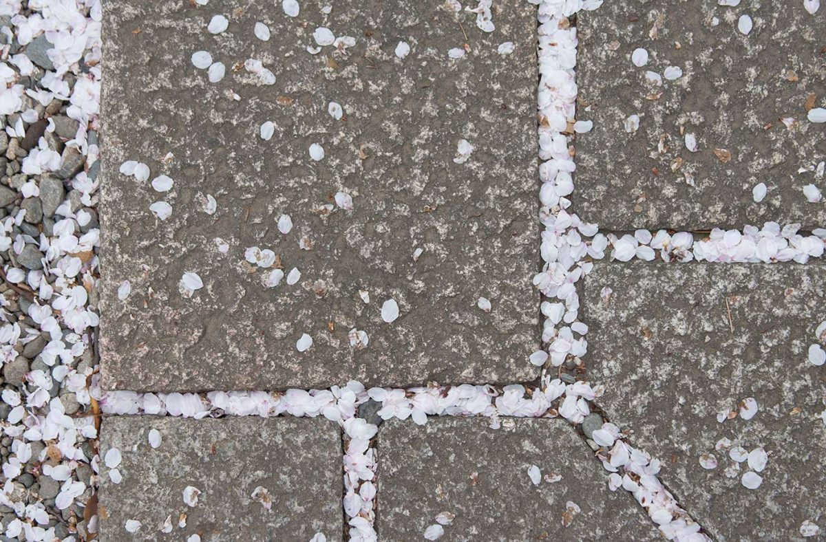 Flower petals nestled into the gaps between paving blocks