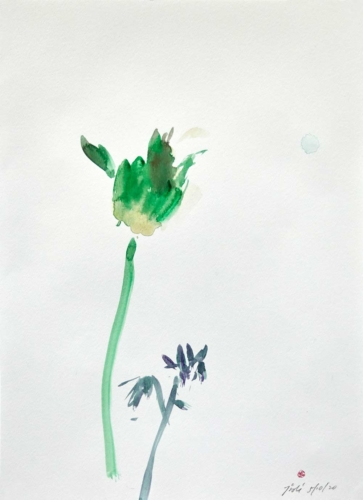 a single tulip in isolation