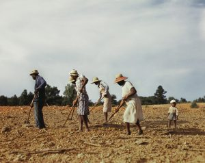 People working the fields