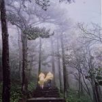 Foggy view of people in the back of a cart in the woods