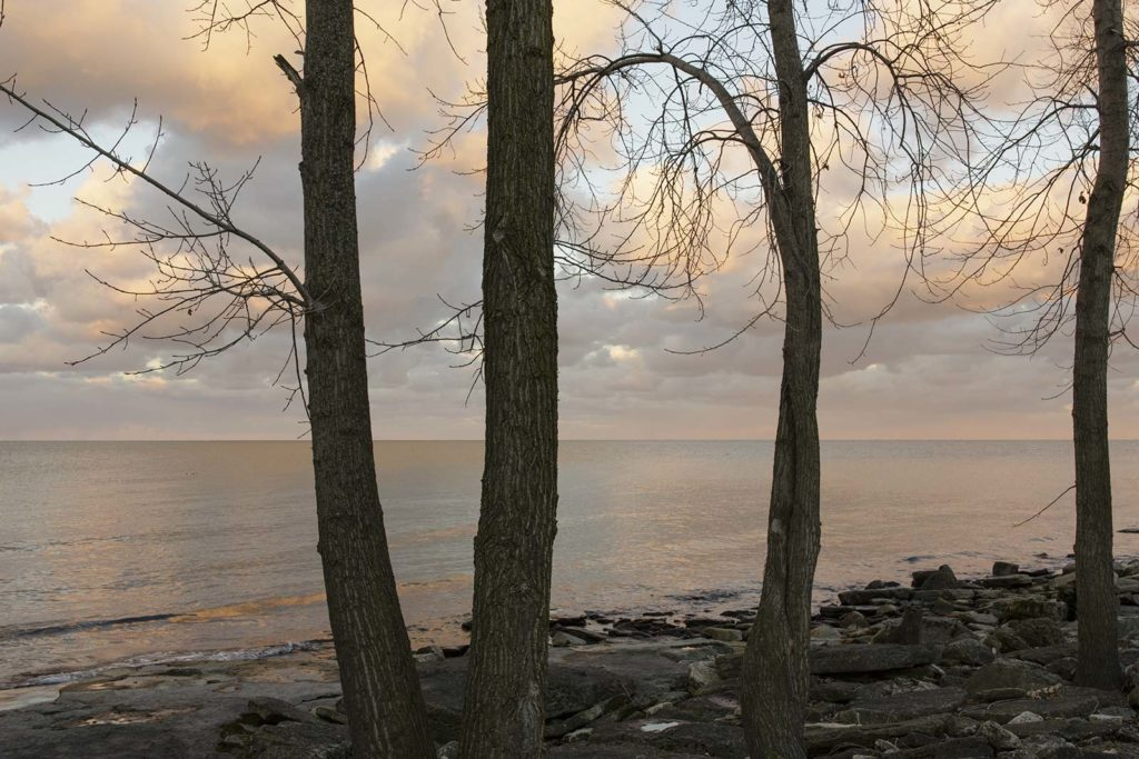 trees along a rocky shore