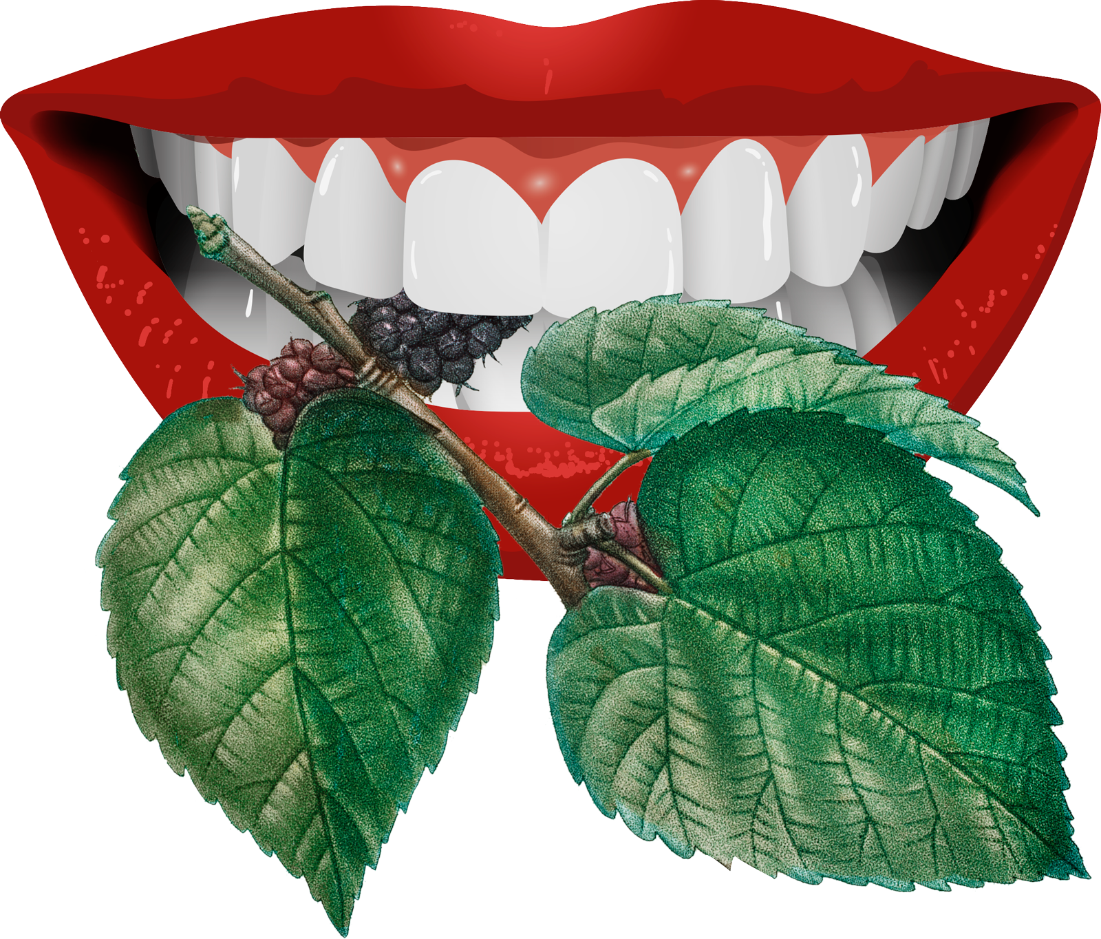 mulberries captured by perfect white teeth surround by painted lips